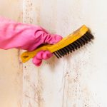 Fungus Amongus: How to Decide Between DIY Mold Removal or Hiring a Professional